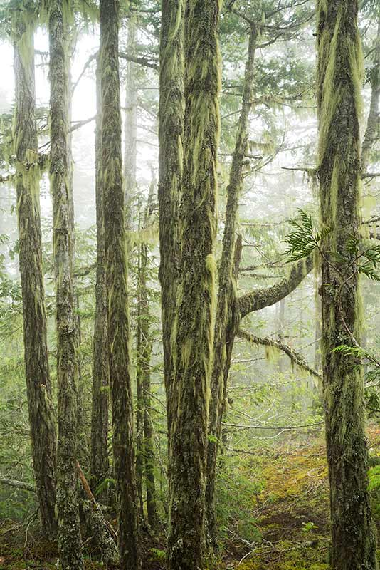 Temperate Rainforest / Morse Creek, Olympic National Park, Washington