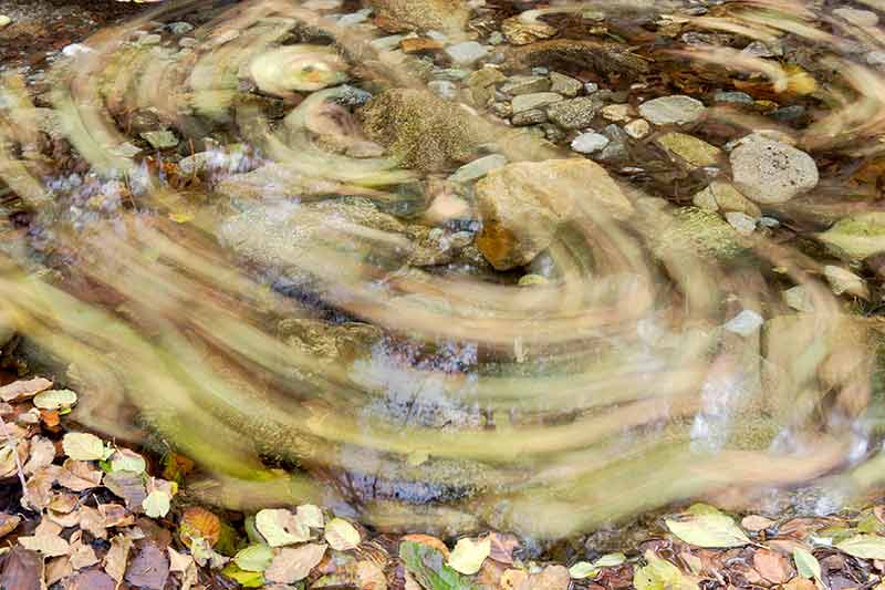 Fallen Leaves in Creek, Angeles National Forest, California