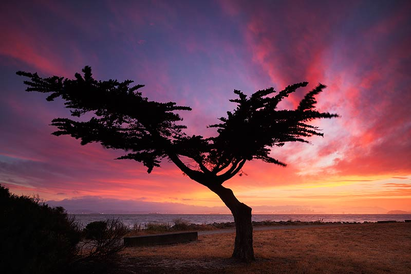 Cypress Tree Photos