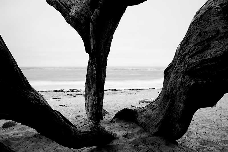 Carmel-by-the-sea Black and White Photos