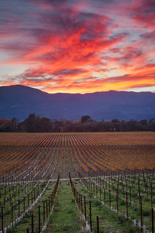 Fall Sunset Over Napa Valley, California